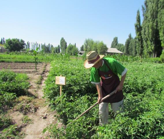Готовые бизнес планы в кыргызстане