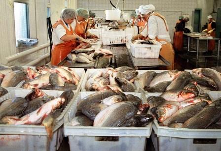 Увеличится производство и переработка рыбы на Кубани