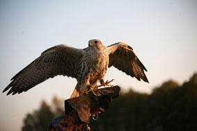 Игры кочевников: Фестиваль соколиной охоты «Салбурун»