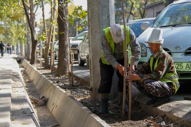 По улице Токтогула будет высажено 250 новых деревьев