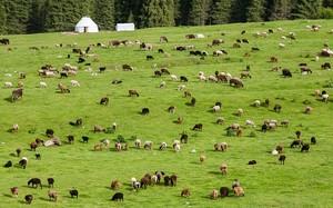 На улучшение управления пастбищами и животноводством Кыргызстан получит $487,5 тыс.
