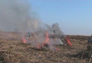 В Кыргызстане уничтожено более 44 тонн конопли