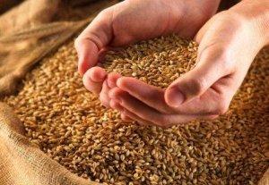 Сапарбек Тынаев предлагает выдавать часть семян фермерам бесплатно