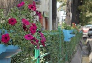 Иса Омуркулов о термочашах для цветов: «Мне тоже сначала они не нравились»