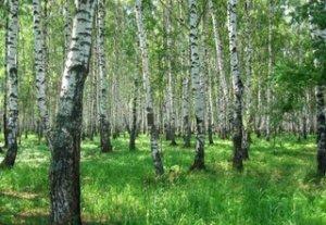 Ученые из стран Центральной Азии и России обсудили проблемы лесов и их сохранения