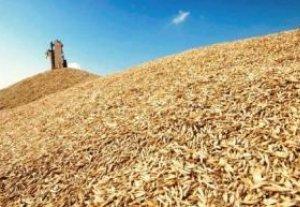 С апреля 2012 года в Кыргызстане начнут улучшать сферу семеноводства