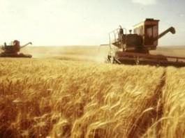 В этом году фермеры Кыргызстана соберут больше зерна, чем в предыдущем