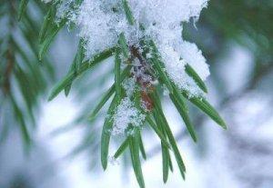 В некоторых областях Кыргызстана ожидаются заморозки