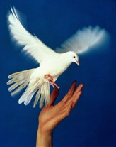 2012 год объявлен Годом семьи, мира и согласия