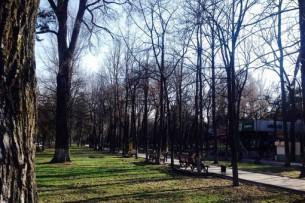 В столице пройдет круглый стол «Восстановим зеленый Бишкек»