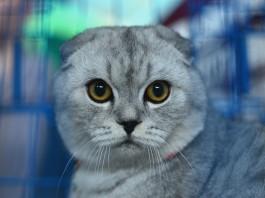 Хозяйку пугает кошка, высматривающая кого-то за холодильником