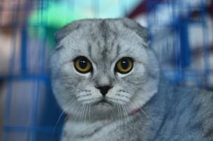 В Ухане коронавирус обнаружили у кошек