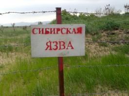 В Джалал-Абаде количество заразившихся сибирской язвой увеличилось