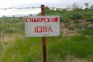 Роспотребнадзор предупредил россиян о вспышке сибирской язвы в Кыргызстане