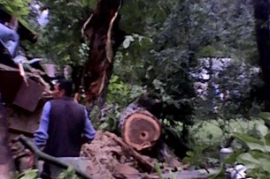 В Базар-Коргоне дерево насмерть придавило женщину