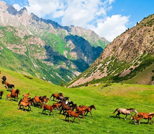В Башкортостане впервые в мире начнут производить сухой кумыс