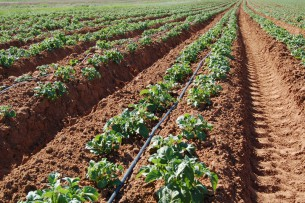 Втрое увеличилось число хозяйств, применяющих капельное орошение в Кыргызстане
