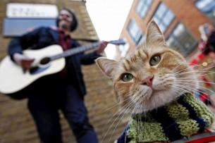 10 самых милых котов интернета, популярности которых позавидовали бы голливудские звезды