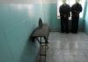 В Бишкеке в СИЗО пытались передать наркотики и деньги, спрятав их в бараньей голове