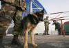 Пограничники Кыргызстана пресекли контрабандный ввоз буровых станков и 1,5 тонны селитры