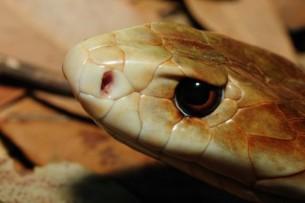 Сняли на видео борьбу двух гигантских змей