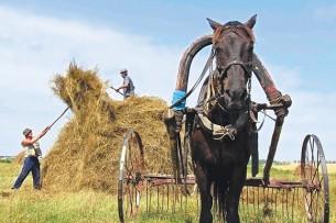 Минсельхоз Кыргызстана предложил ввести запрет на вывоз сена, ячменя и пшеницы