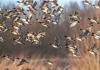 Центральной Азии может грозить птичий грипп