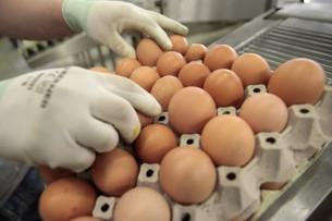 Розничные цены на яйца и картофель в Кыргызстане в среднем за год увеличились в 1,5 раза