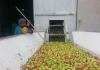 В Кыргызстане производители начнут разливать сок в «Пюр-Пак»