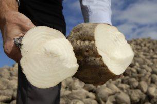 Минэкономики: Кыргызстан за счет собственного урожая сократит импорт сахара из других стран