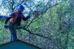 Кто виноват в вырубке деревьев на ул. Токтоналиева? Выясняют активисты (видео)