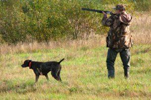 Депутат предлагает упразднить департамент охоты