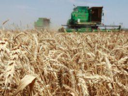 В Кыргызстане засеяли более 600 тыс. гектаров яровых