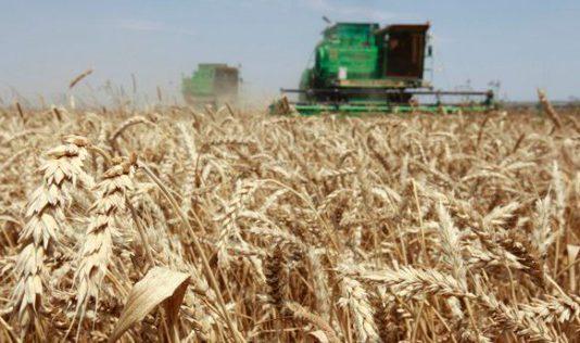 СМИ: От поддержки сельского хозяйства в Казахстане фермерам хочется выть волком