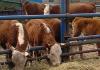 В Кыргызстане проведут очередную сельскохозяйственную перепись