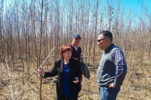 В Бишкеке составят реестр гнилых и ветхих деревьев