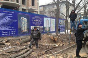 Против вырубки деревьев в Бишкеке собирают подписи