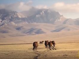 Телеканал «Аль-Джазира» снял серию передач о Кыргызстане