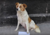 Хозяйка на видео узнала свою собаку, которая принесла письмо и просит помочь ее найти