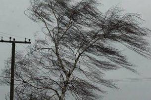 Последствия штормового ветра: повреждено несколько машин