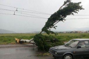 В Бишкеке из-за ветра на проезжую часть упало дерево