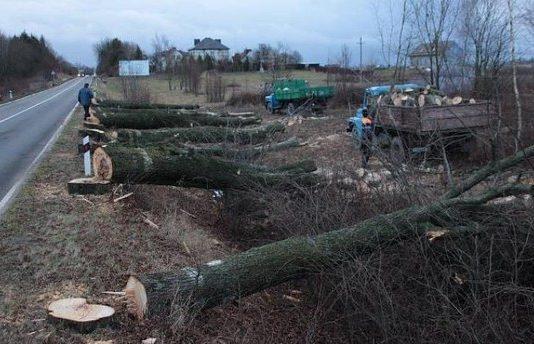 Калича Умуралиева — о том, как решить проблему пробок в Бишкеке без вырубки деревьев