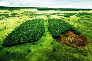 Кыргызстану и не снилось: в Нидерландах демонтируют автотрассы, чтобы сажать деревья
