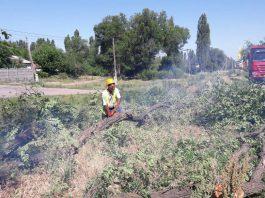 Минтранс: Для расширения трассы Бишкек — Кара-Балта начато корчевание деревьев