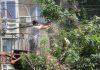 «Зеленстрой» приступил к вырубке 52 деревьев в «Востоке-5»