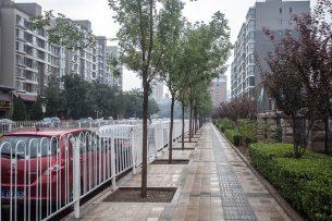 Тротуар против дерева: как относятся к озеленению в Бишкеке и городах мира