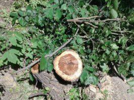 Активисты: Вырубка 7 тыс. деревьев нанесет непоправимый урон микроклимату города, здоровью граждан