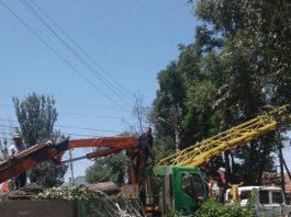Как вырубают деревья на ул. Токтоналиева (фото, видео)