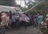В Бишкеке дерево упало на бус, пострадал водитель (видео)