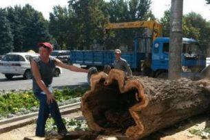 Решение о вырубке деревьев в Ботаническом саду еще не принято